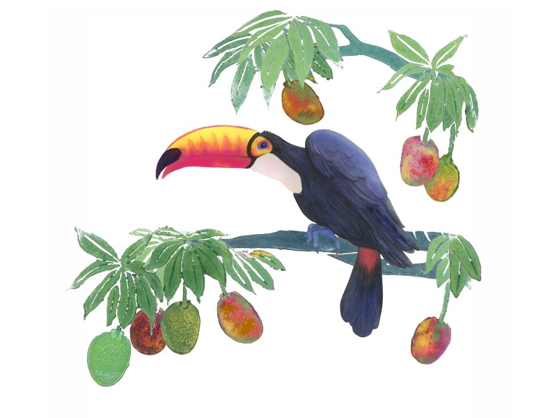 Toucan by Delia Selwood